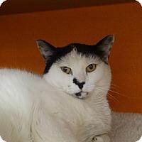 Adopt A Pet :: Natasha - Elyria, OH