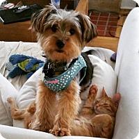 Adopt A Pet :: Lily Ann - West Palm Beach, FL