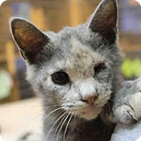 Adopt A Pet :: ARVIKA - Pittsburgh, PA
