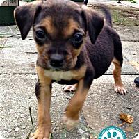 Adopt A Pet :: Wesley - Kimberton, PA