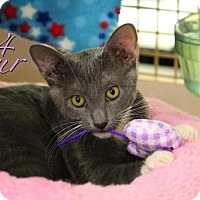Adopt A Pet :: Four-13381 - Richardson, TX
