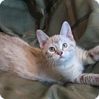 Adopt A Pet :: Xena - Davis, CA