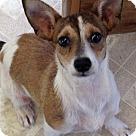 Adopt A Pet :: TRAPPER