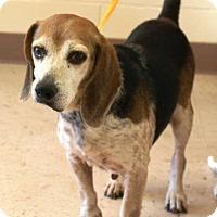 Adopt A Pet :: Weezy - McDonough, GA