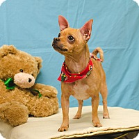 Adopt A Pet :: SANDI - Poteau, OK
