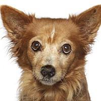 Adopt A Pet :: Princess - Oakland Park, FL