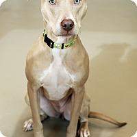 Adopt A Pet :: Kara - Appleton, WI