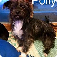Adopt A Pet :: Polly - ST LOUIS, MO