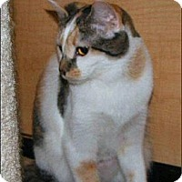 Adopt A Pet :: Sagittarius - Atlanta, GA