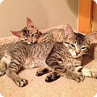 Adopt A Pet :: Trevally - Mount Laurel, NJ