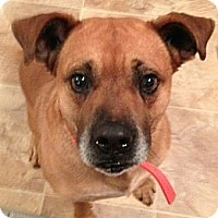 Adopt A Pet :: Ellis - Brattleboro, VT