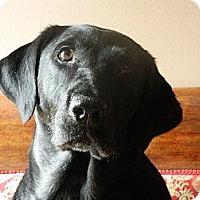 Adopt A Pet :: Bella - Marietta, GA