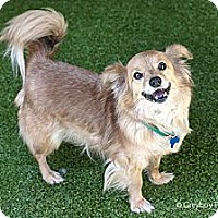 Adopt A Pet :: Arnold - Mission Viejo, CA