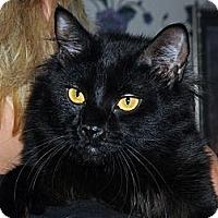 Adopt A Pet :: Sampson - Monroe, GA