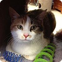 Adopt A Pet :: Manda - Byron Center, MI
