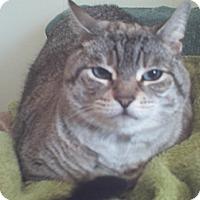 Adopt A Pet :: Mara - Springfield, PA