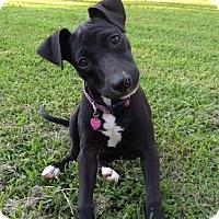 Adopt A Pet :: Chloe - Richmond, VA