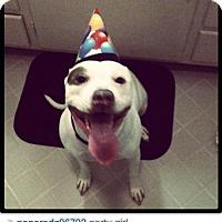 Adopt A Pet :: Makanani - Mission Viejo, CA