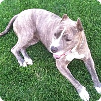 Adopt A Pet :: Elsa - Redmond, OR