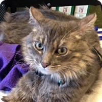 Adopt A Pet :: Duke - San Ramon, CA