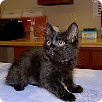 Adopt A Pet :: Sunny Jim - Medina, OH