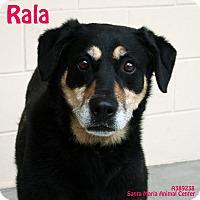 Adopt A Pet :: Rala - Santa Maria, CA