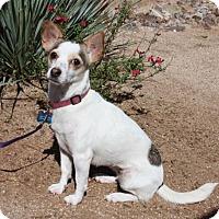 Adopt A Pet :: PIXIE - Tucson, AZ