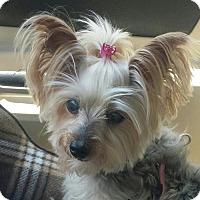 Adopt A Pet :: Ava - Pueblo, CO