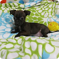 Adopt A Pet :: PUNKY - Bedminster, NJ