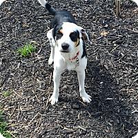 Adopt A Pet :: Tipper - New Oxford, PA