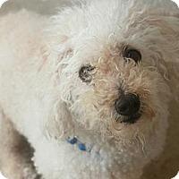 Adopt A Pet :: BATTER - Kyle, TX