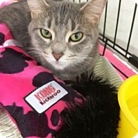 Adopt A Pet :: Patches - Kalamazoo, MI