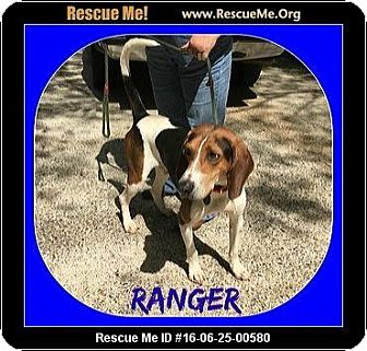Treeing Walker Coonhound Dog for adoption in Milton, Georgia - Ranger