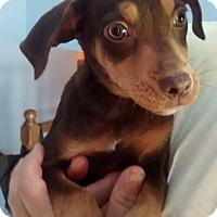 Adopt A Pet :: Buttons - Joliet, IL