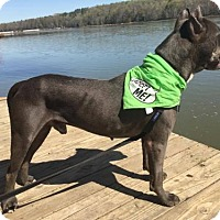Adopt A Pet :: Titan - Graniteville, SC