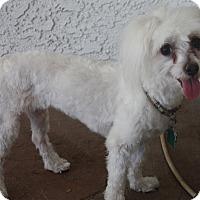 Adopt A Pet :: Kaia - Henderson, NV