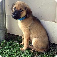 Adopt A Pet :: John - New Canaan, CT
