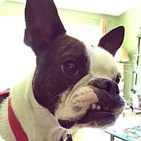 Adopt A Pet :: Millie Moo - Greensboro, NC