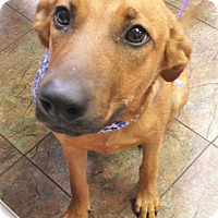 Adopt A Pet :: Stella ~ ADOPTED! - Carthage, MS