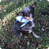 Adopt A Pet :: Rosalie - Boerne, TX