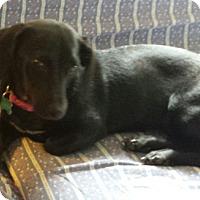 Adopt A Pet :: Valentina - Aurora, IL