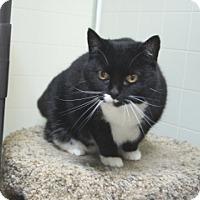 Adopt A Pet :: Precious II - Libby, MT