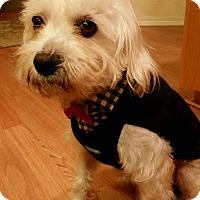Adopt A Pet :: Jacques - Sheridan, OR