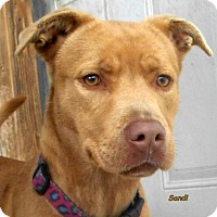 Adopt A Pet :: Sandi - Oskaloosa, IA