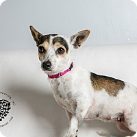 Adopt A Pet :: Sweet Pea - Inglewood, CA