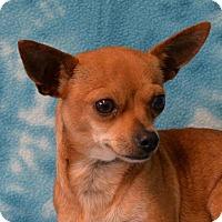 Adopt A Pet :: Cosette - Eureka, CA