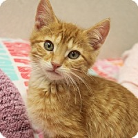Adopt A Pet :: Bert - Naperville, IL