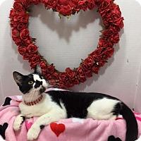Adopt A Pet :: Harper - Pasadena, TX