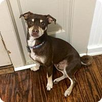 Adopt A Pet :: Merlin - McKinney, TX