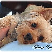 Adopt A Pet :: Miss Daisy Mae - Palm City, FL